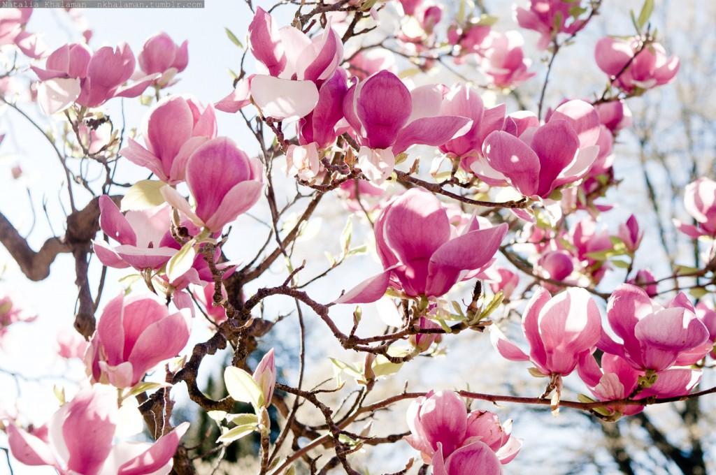 Страна Басков в цвету