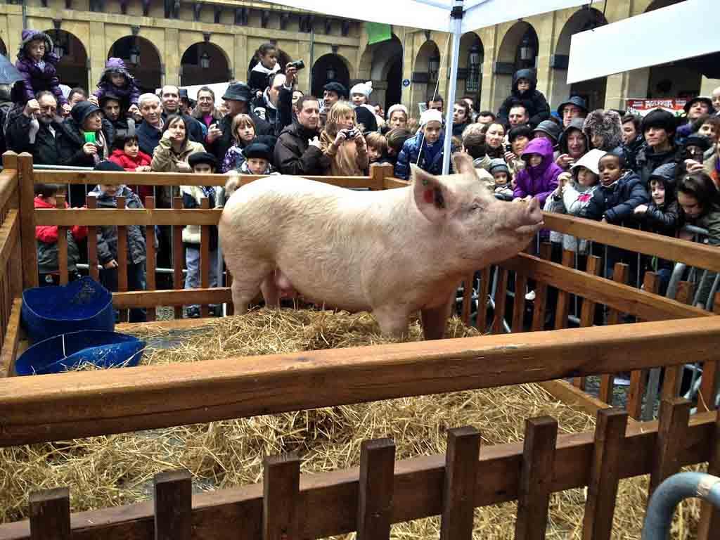 santo-tomas-rifa-cerdo-2